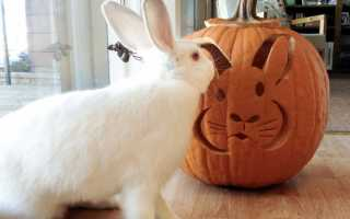 Можно кроликам кабачки сырые