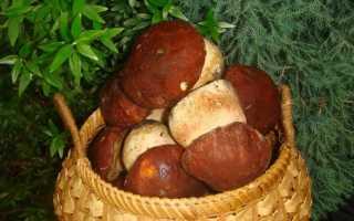 Можно ли замораживать жареные грибы
