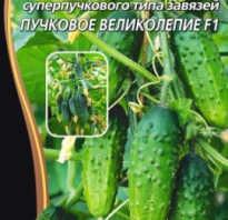 Семена огурцов пучковое великолепие купить в москве