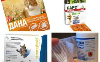 Препараты для кошек от блох и глистов