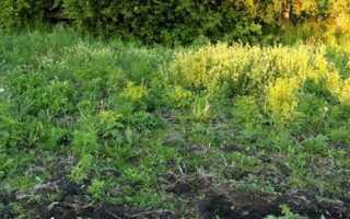 Как определить кислотность почвы самостоятельно по сорнякам