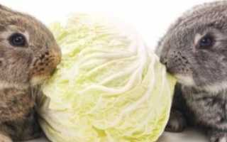 Можно ли кормить кроликов капустой