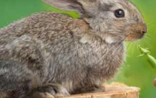 Можно ли кроликам давать горох из магазина