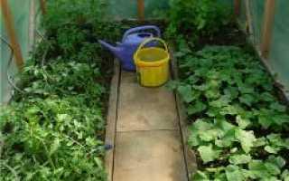 Что можно сажать рядом с помидорами и огурцами