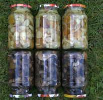 Можно ли маринованные грибы закрывать капроновыми крышками