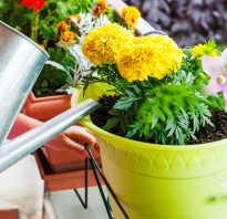 Можно ли поливать цветы водой из под крана