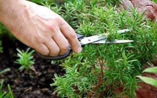 Лечебные травы которые можно вырастить на даче