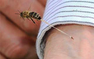 Какое количество укусов пчел смертельно для человека