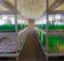 Какую почву использовать в подвале для выращивания зелени