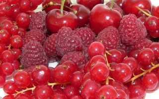 Как называется дерево с красными ягодами
