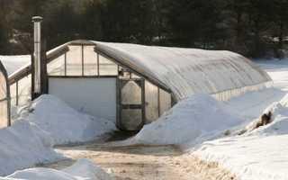 Как выращивают огурцы в теплице круглый год