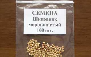 Как вырастить шиповник из семян в домашних условиях