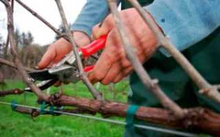Как правильно вырезать виноград осенью