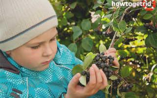 С какого возраста можно давать ребенку черноплодную рябину