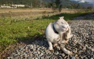 Средство от блох для котят 1 месяц