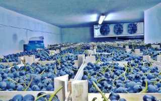 Как хранить виноград в холодильнике