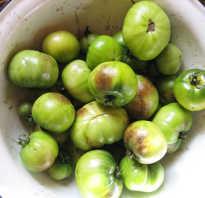 Какие томаты не болеют фитофторой