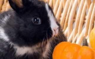 Кроликам 1 месяц чем можно кормить
