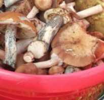Как приготовить плюсы грибы
