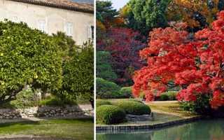 Дерево листья как у рябины только большие