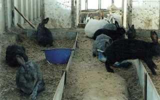 Можно ли держать кроликов зимой в теплице