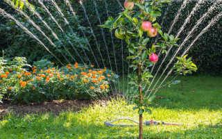 Как часто поливать деревья летом