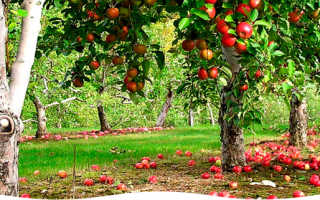 Удобрение осень как применять