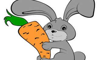 Как хранить морковь в овощехранилище